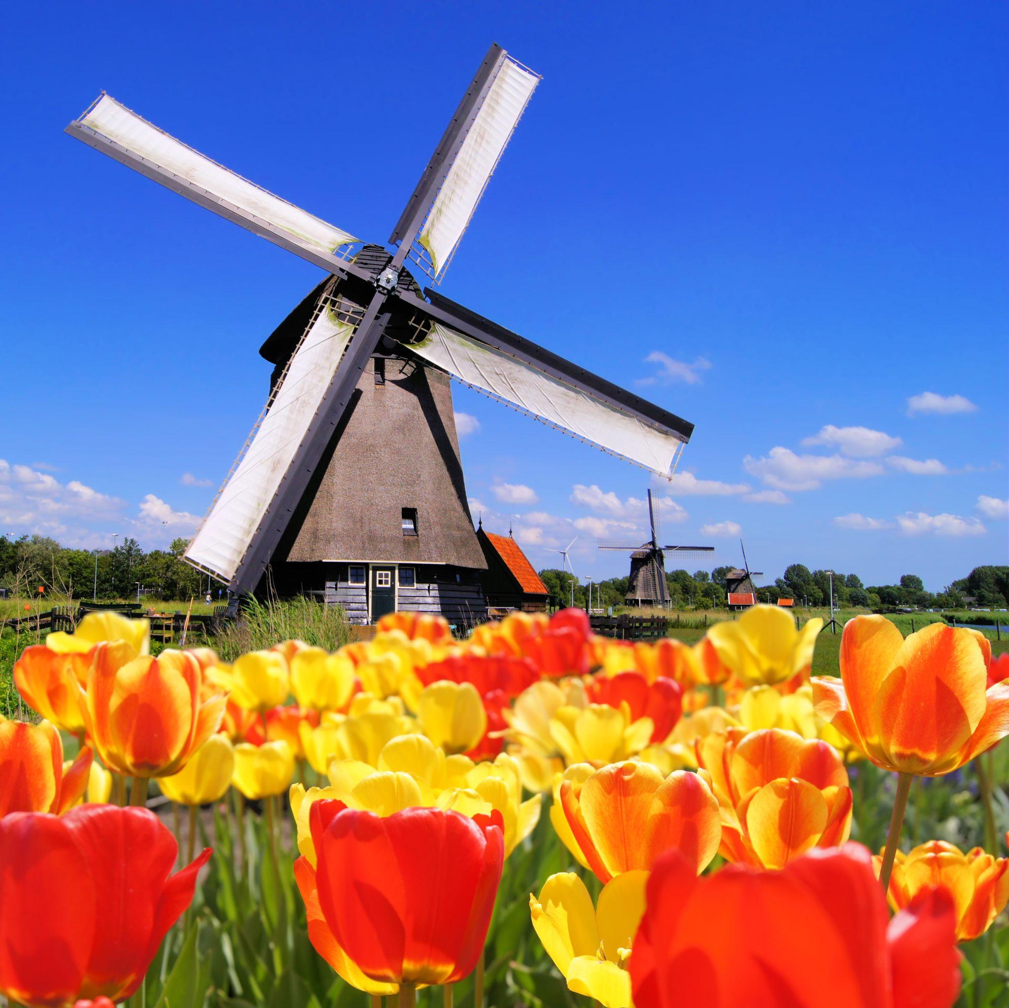 קניית דירה באמסטרדם: למה כדאי?
