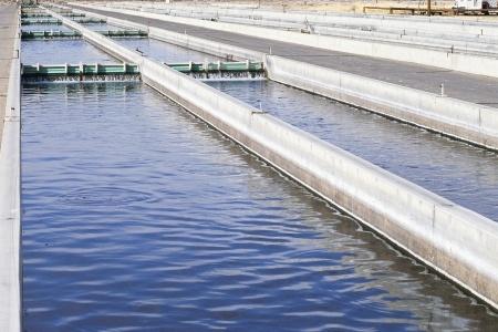 גזר דין למפעל ייצור נייר עקב פגיעה באיכות הסביבה
