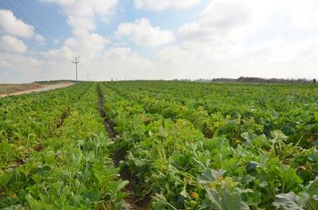 המדינה תפצה יורשי קרקע חקלאית על הפקעת קרקע