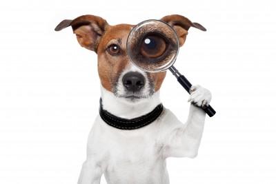 תקיפת כלבים בשכונה: מהו סכום הפיצוי לבני זוג שהותקפו בברוטליות על ידי כלבים?