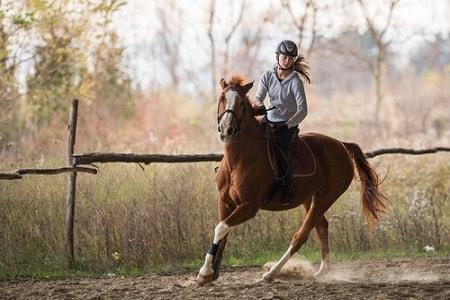 תאונת סוס: איך אפשר לקבל פיצויים בעקבות תאונת רכיבה או נפילה?